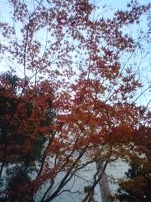 ★★マネキンダイアリー★★-081213_1445~01.jpg