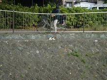 武蔵野-1