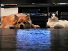 いぬもあるけばネコにあたる。~親ばかでドーモ スミマセン~