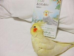 たんぽぽ052206