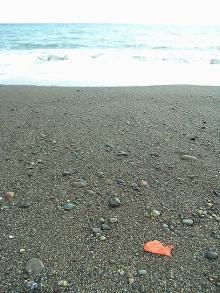 海辺の金魚