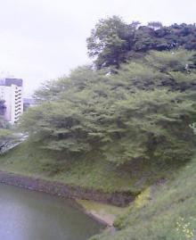at武道館Again