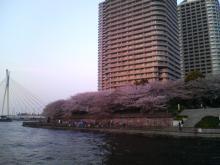 桜「@東京WATER Front
