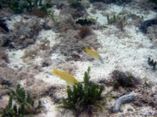 かわいい熱帯魚