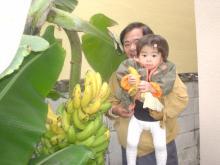 じいじのバナナ