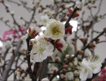 miyatake-宮武--flower3