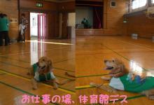 小学校の体育館は懐かしい場所(^。^)