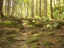 大山の森②