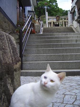 ええとこ尾道-御袖天満宮下の猫(白)