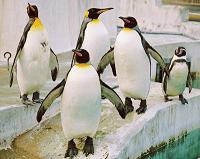 デスクトップblog_penguin.JPG