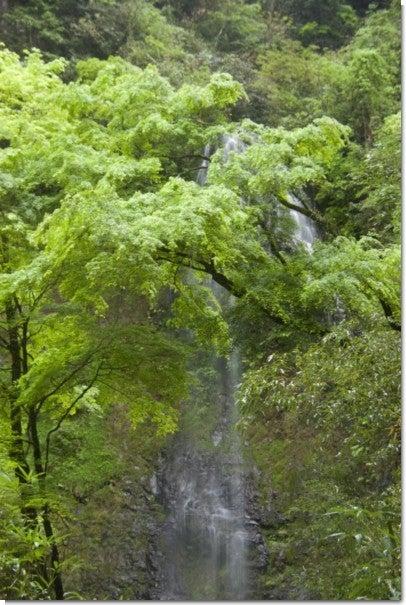 うなぎ滝6