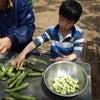 春野菜の収穫の画像