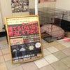 昨日は、和泉市のメトロ和泉で解体イベントの画像