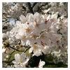 4月です(*^o^*)【アニバーサリープランナースクール】の画像