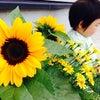 向日葵☆の画像