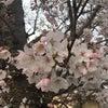 春が来た♩の画像