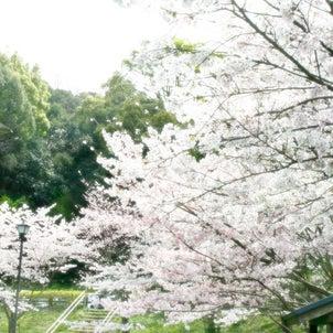 【14インチ】花見日和の画像