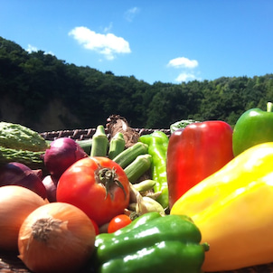 「夏野菜」旬の野菜に秘められたパワーとは?の画像