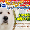 10月23日イヌリンピックレジーナの森カップ開催!の画像
