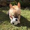 庭=ボール遊びの画像