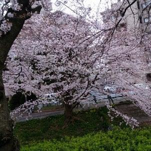 春、桜の画像