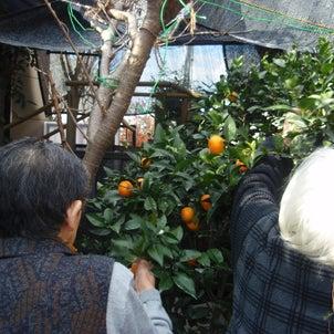 収穫の画像