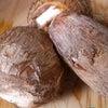 冬は里芋をの画像