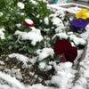 雪が・・の画像
