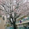 春の週末♪の画像
