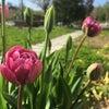春支度。の画像