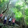 田原の屋久島コースで見られる樹木 【目次】| 渥美半島☆自然感察ガイドの画像