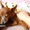 愛ピンくりちゃんの日常ケアはペットリフレクソロジーの画像