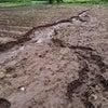 北海道の梅雨?の影響がじわじわと。の画像