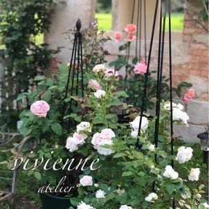 ヴィヴィアン  アトリエの薔薇は2ステージに✨の画像