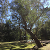 オーストラリアの自然の中での画像