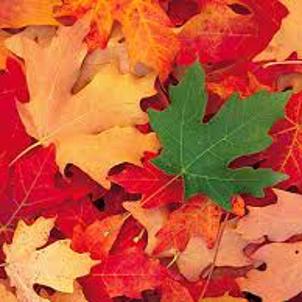 『秋のくらしと片づけ講座』のお知らせの画像