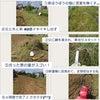 奈良で草刈り!の画像