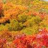 【豊穣の世界】秋のヒーリング企画①の画像