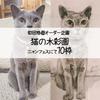 【CATS】明日はニャンフェス8 新作と特価のお知らせです〜の画像