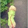 ぷーが3才になりましたの画像