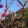 春を見つけに小石川植物園への画像