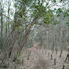ややの森散歩の画像