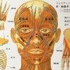 マスクしてたら頬がたるんだ!≪尼崎の小顔フェイシャル&黄土よもぎ蒸し≫の画像