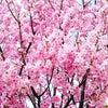 春分の日から自分をバージョンUPさせる方法の画像