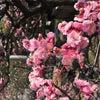 春ですね♪の画像