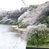 九段下の桜の画像