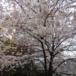 お花見の画像