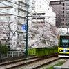 荒川線と桜の画像