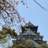 大阪城公園で花見(^^)の画像