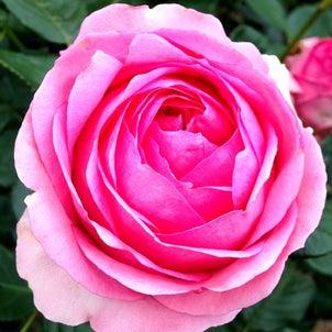4月9日は子宮の日♡の画像
